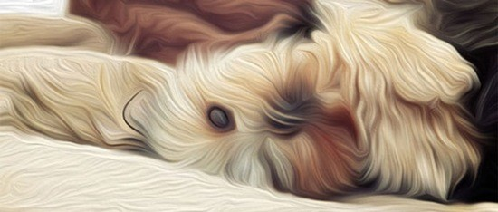 Oil-Paint-Filter-in-Photoshop-CS6