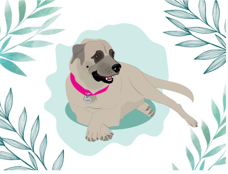 Haya Awesome dog illustration images to inspire you