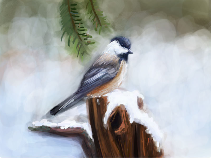 Winter-Bird-Study-3 Beautifully designed winter illustration examples for you
