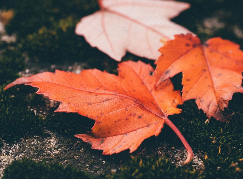 fall2 Fall background images to use in your projects
