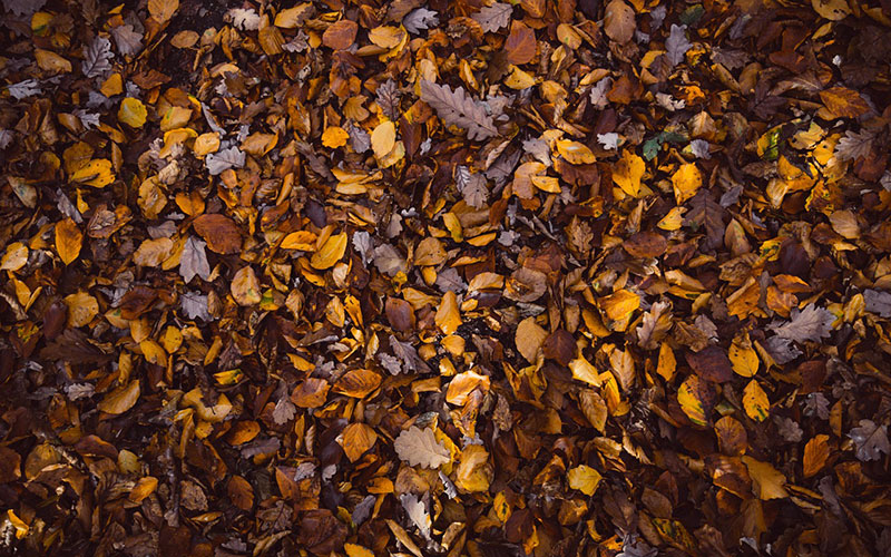 fall5 Fall background images to use in your projects