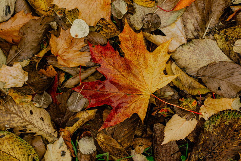 fall15 Fall background images to use in your projects