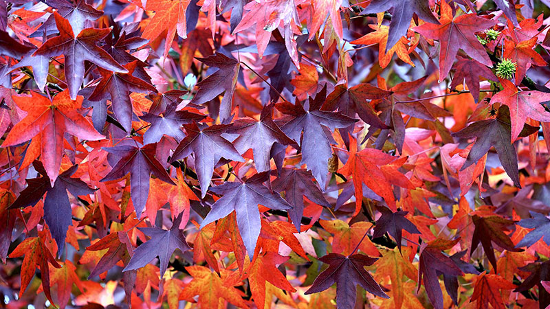 fall16 Fall background images to use in your projects