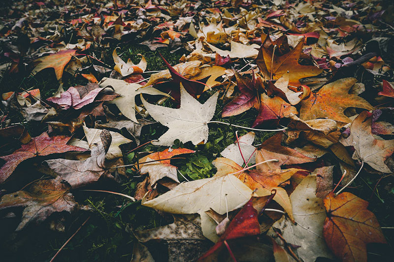 fall18 Fall background images to use in your projects