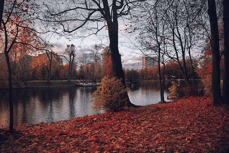 fall19 Fall background images to use in your projects