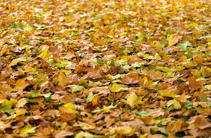 Fall-background-Soil-in-perspective Fall background images to use in your projects