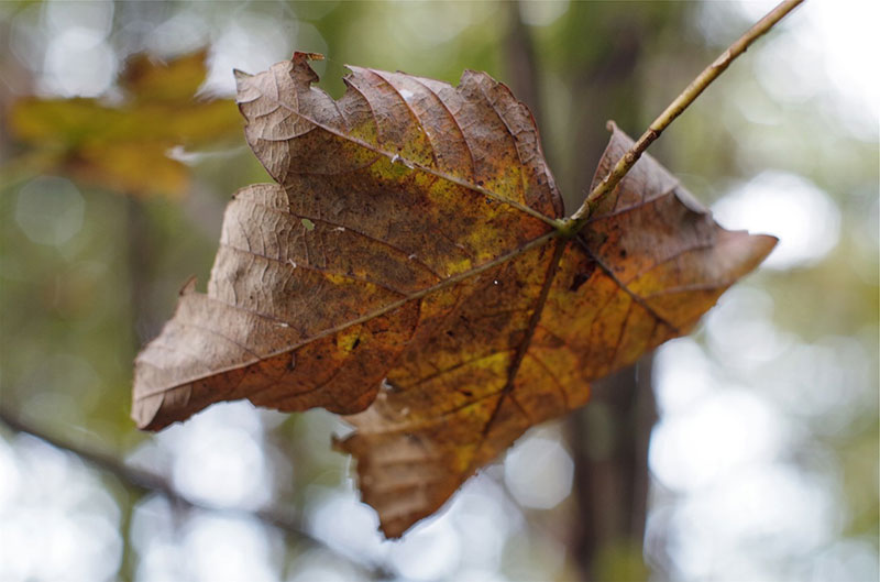 Fall-Leaf-Texture-For-You-Appreciate-all-the-details Fall background images to use in your projects