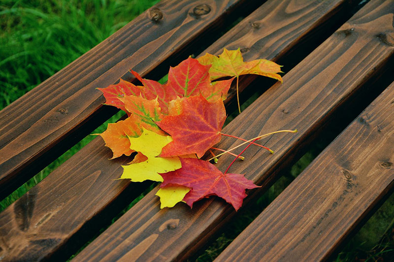 Fallen-leaf-An-artistic-look Fall background images to use in your projects
