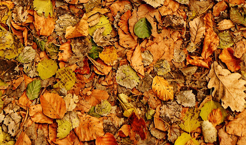 Colorful-Fall-Texture-For-You Fall background images to use in your projects