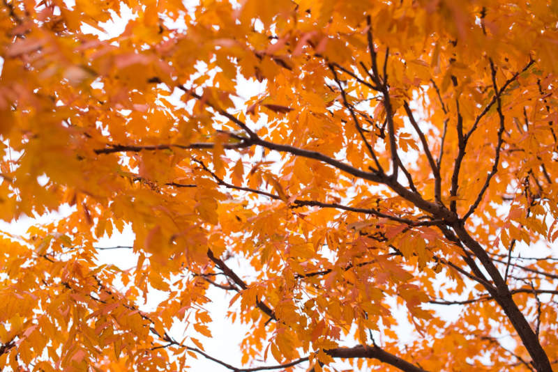 at2-800x534 Free autumn background images to use in designs this fall