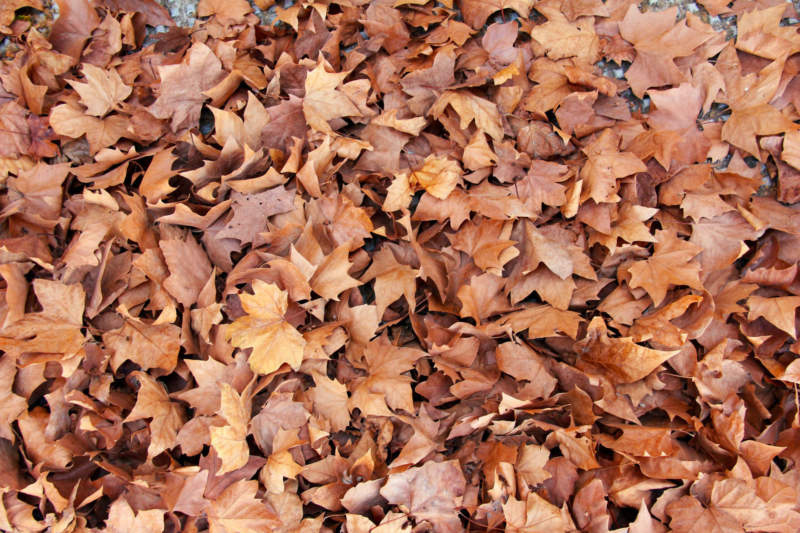 at11-800x533 Free autumn background images to use in designs this fall