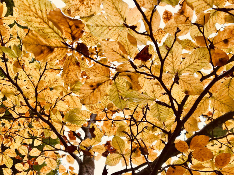 at12-800x600 Free autumn background images to use in designs this fall
