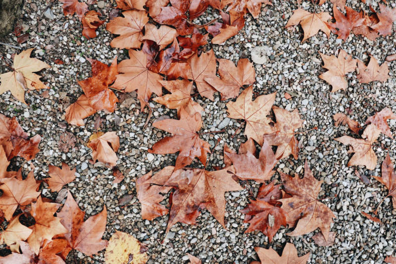 at14-800x533 Free autumn background images to use in designs this fall