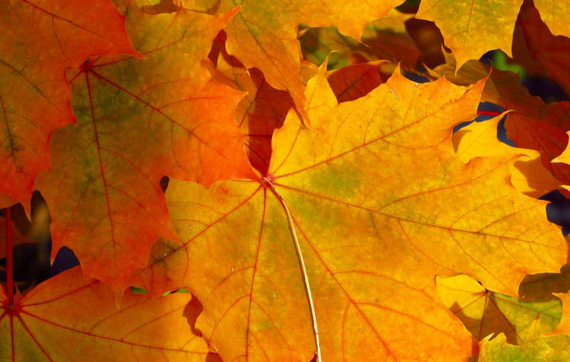 at15-800x508 Free autumn background images to use in designs this fall