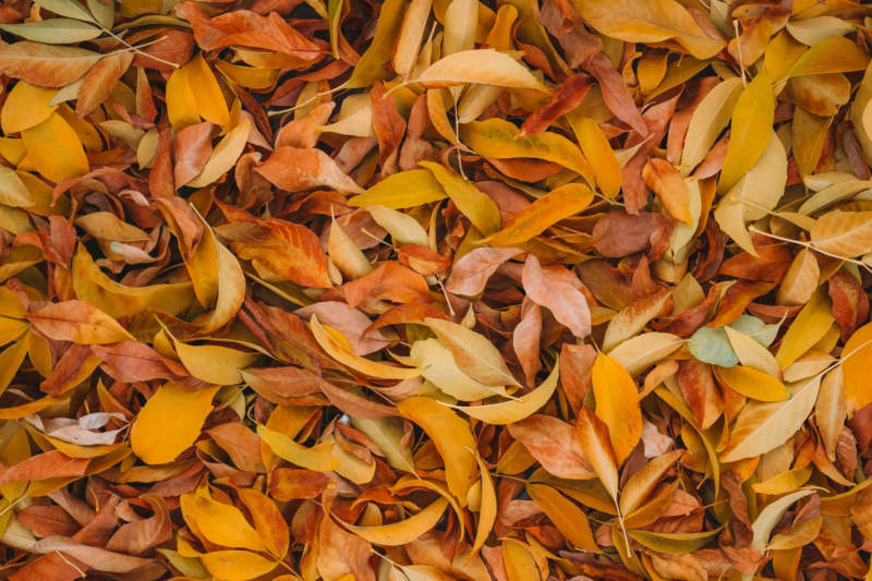 at16-800x533 Free autumn background images to use in designs this fall