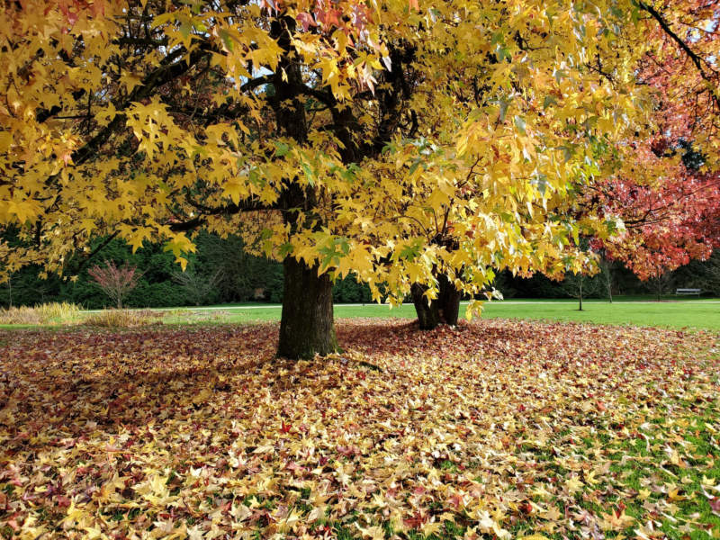 at18-800x600 Free autumn background images to use in designs this fall