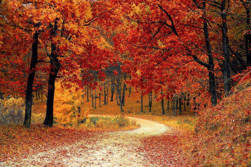 at19-800x533 Free autumn background images to use in designs this fall
