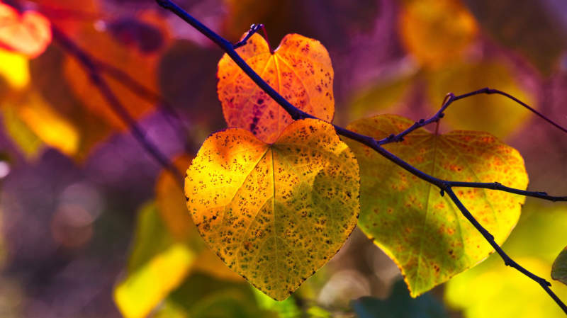 at20-800x449 Free autumn background images to use in designs this fall