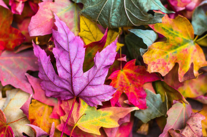 at3-800x533 Free autumn background images to use in designs this fall