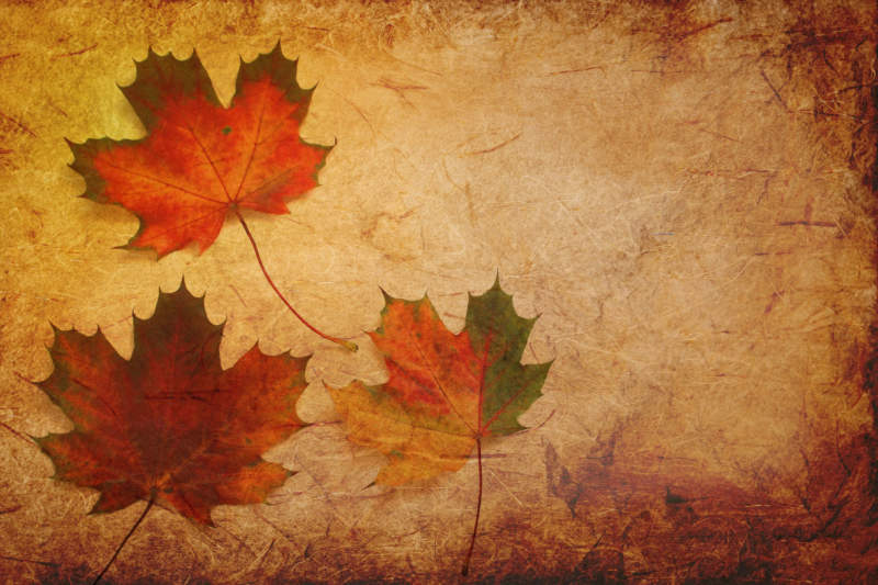 at23-800x533 Free autumn background images to use in designs this fall