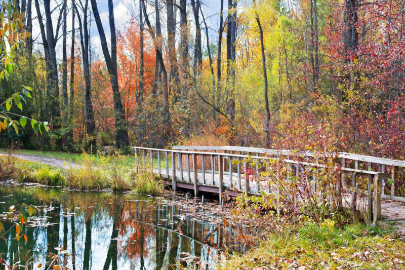 at24-800x533 Free autumn background images to use in designs this fall