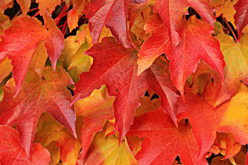 at25-800x533 Free autumn background images to use in designs this fall