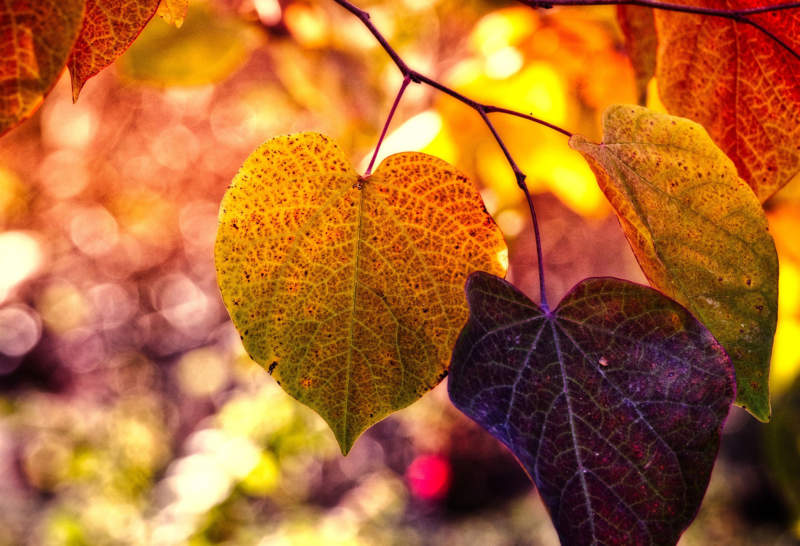 at26-800x546 Free autumn background images to use in designs this fall