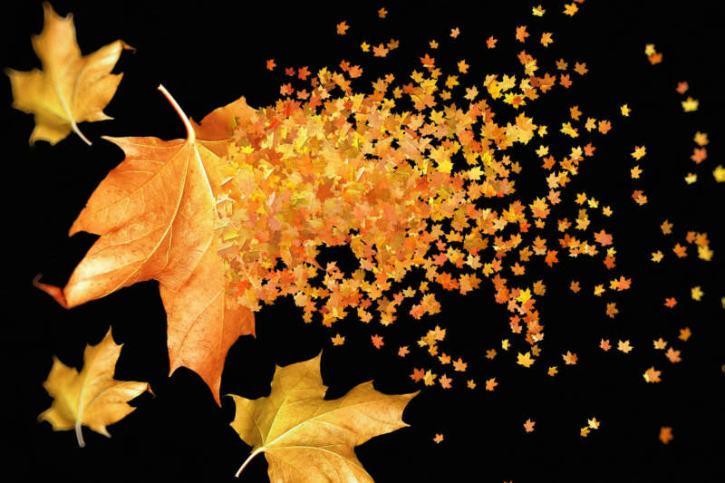at27-800x533 Free autumn background images to use in designs this fall