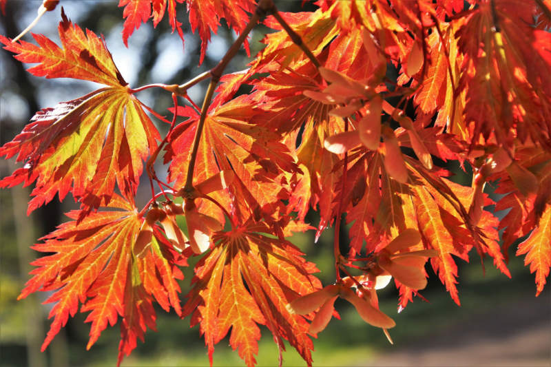 at28-800x533 Free autumn background images to use in designs this fall