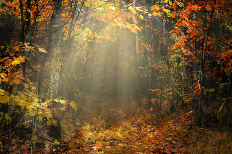 at29-800x533 Free autumn background images to use in designs this fall