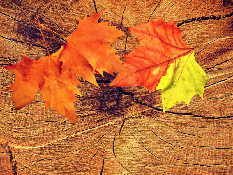 at31-800x600 Free autumn background images to use in designs this fall