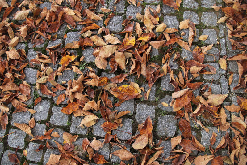 at32-800x533 Free autumn background images to use in designs this fall
