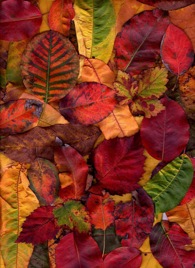 Free-Autumn-Texture-For-Download-The-predominance-of-colors Free autumn background images to use in designs this fall