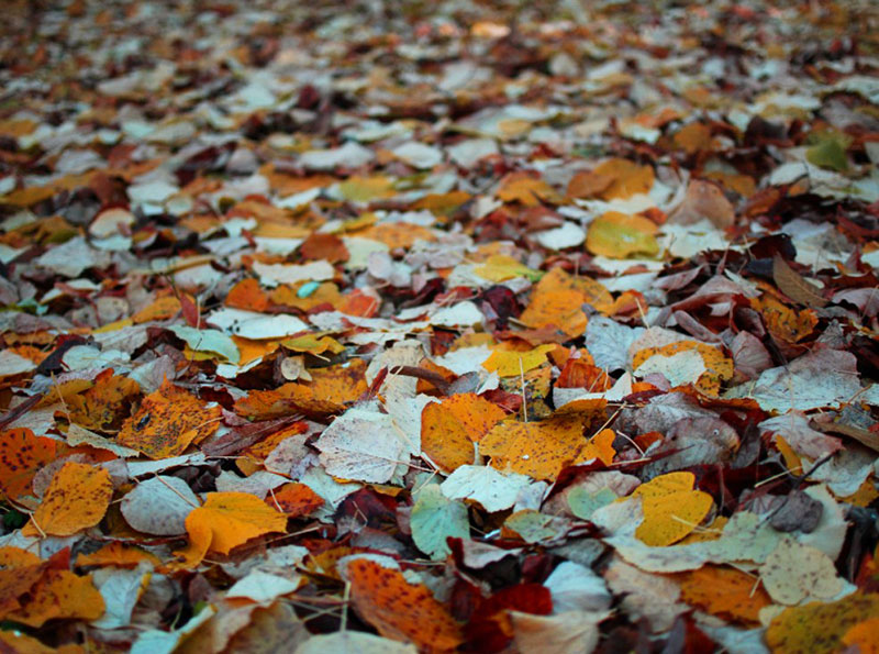 Autumn-Leaves-Background-Image-Add-perspective Free autumn background images to use in designs this fall