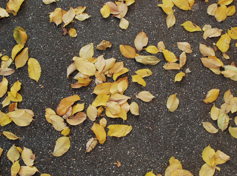 Autumn-Leaves-On-Asphalt-Free-Texture-Autumn-in-the-city Free autumn background images to use in designs this fall