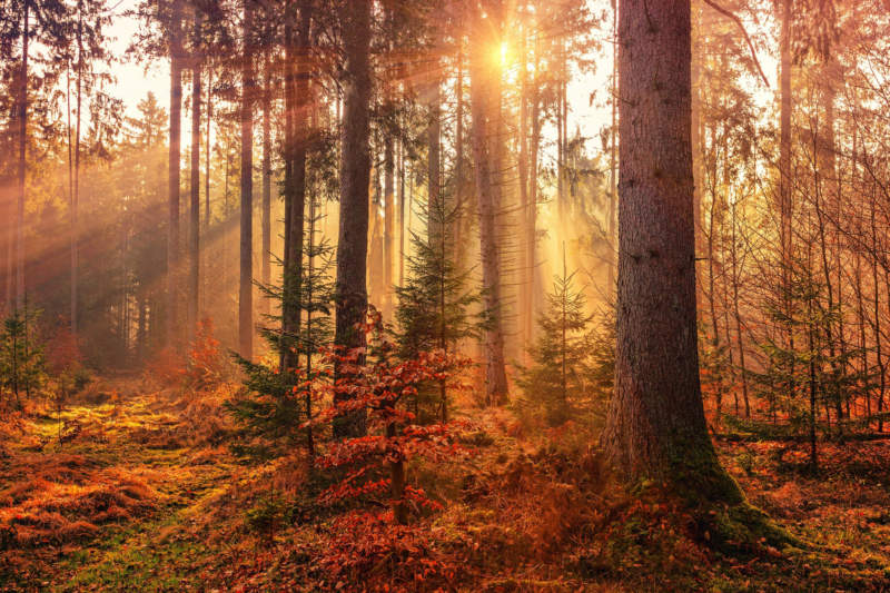 at5-800x533 Free autumn background images to use in designs this fall