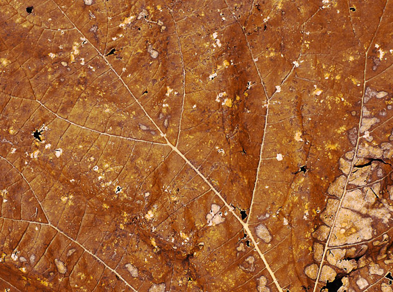 Dry-Leaf-Closeup-Texture-High-Res-A-world-full-of-details Free autumn background images to use in designs this fall