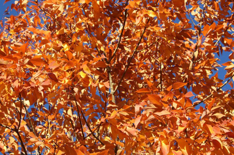 Orange-Autumn-Leaves-Beautiful-sky Free autumn background images to use in designs this fall