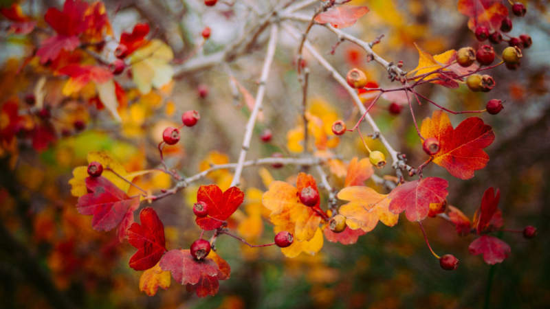 at6-800x450 Free autumn background images to use in designs this fall