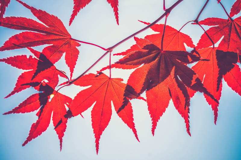 at7-800x532 Free autumn background images to use in designs this fall