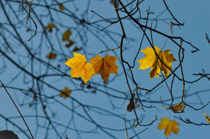 at8-800x528 Free autumn background images to use in designs this fall