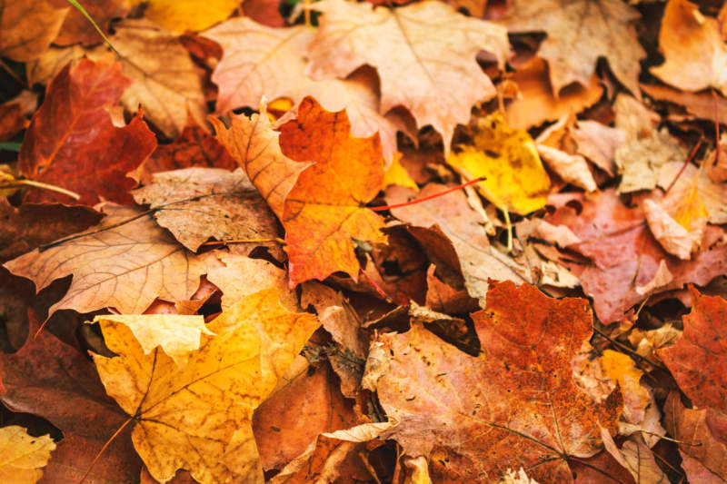 at9-800x533 Free autumn background images to use in designs this fall