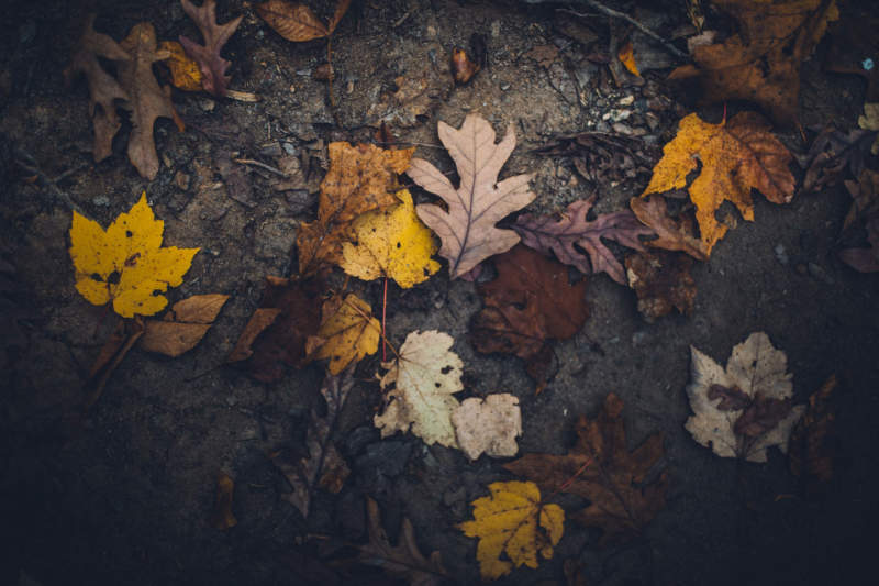 at10-800x533 Free autumn background images to use in designs this fall