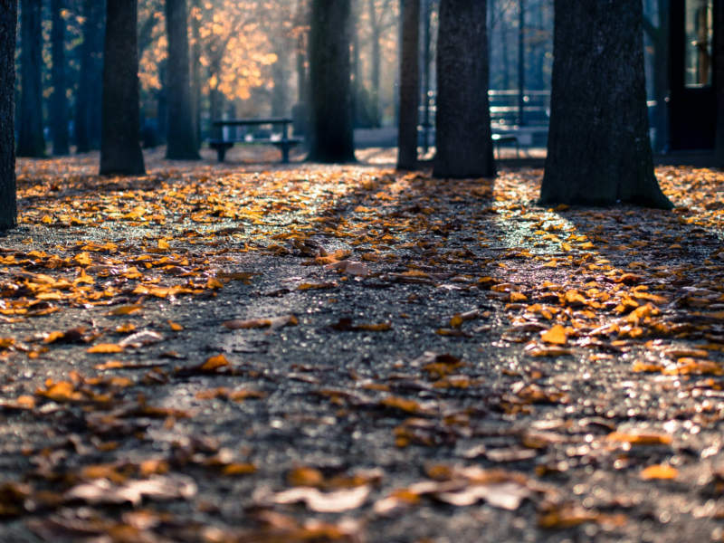 at1-800x600 Free autumn background images to use in designs this fall