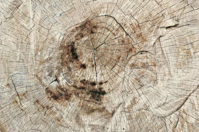 w15-800x533 Free wooden background images and textures for design projects