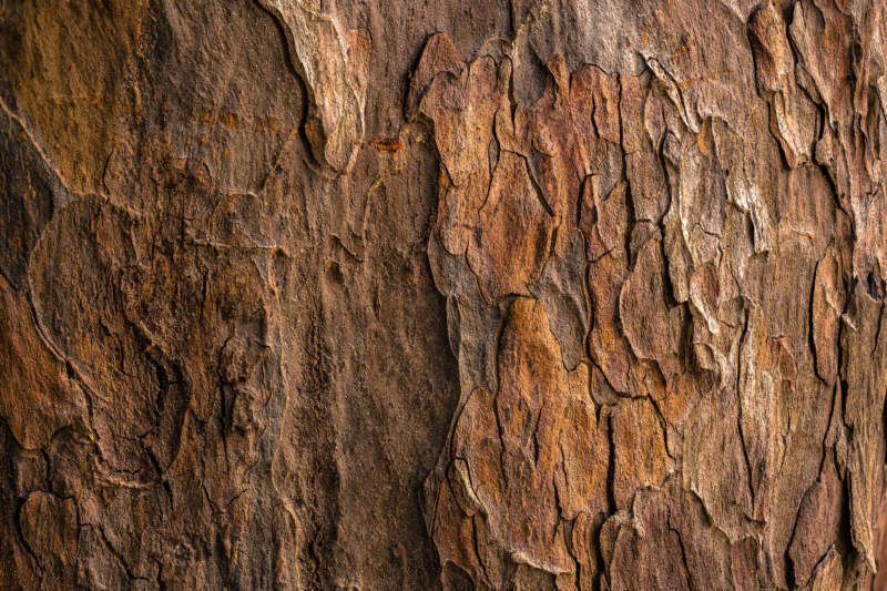 w17-800x533 Free wooden background images and textures for design projects