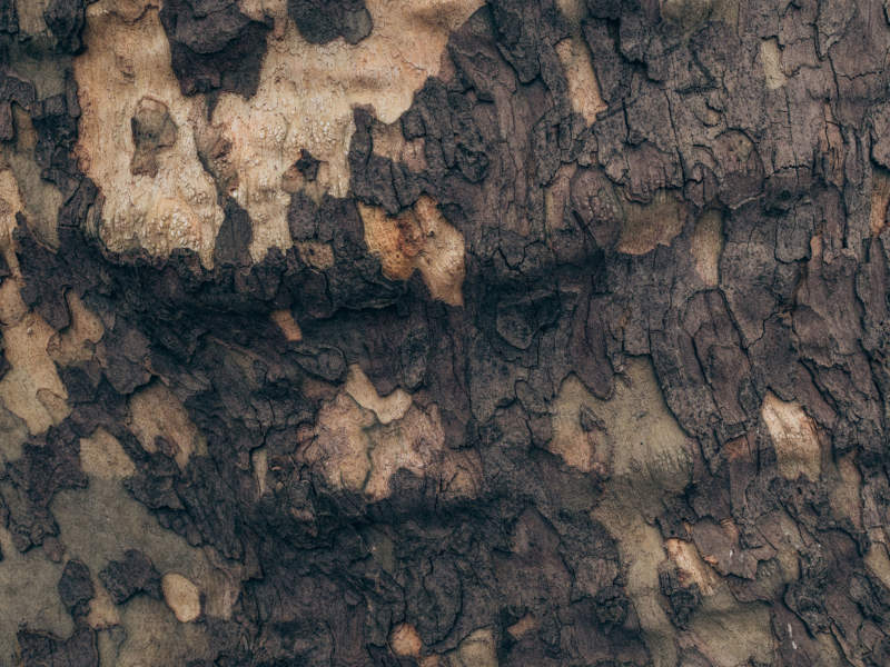 w18-800x600 Free wooden background images and textures for design projects