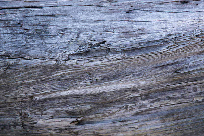 w31-800x533 Free wooden background images and textures for design projects