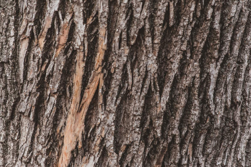 w33-800x533 Free wooden background images and textures for design projects